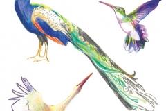Birds-Decourchelle_A-1